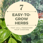 7 Easy-to-Grow Herbs that Will Transform Your Cooking