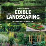 Edible Landscape Inspiration
