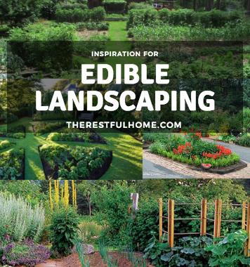Edible Landscape Inspiration
